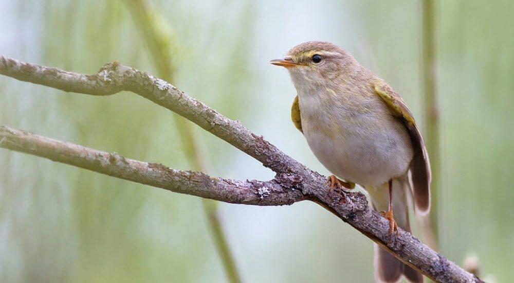 enoturismo-aves-castillayleon-valladolid